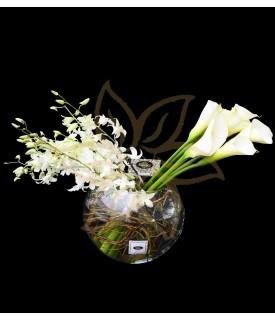 Solo Rosas Blancas