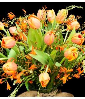Sunset Tulips