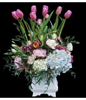 Hermosos Tulipanes Rosas