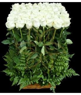 Only White Roses