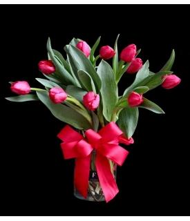Fiorence Tulips