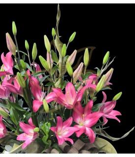Dream Lilies