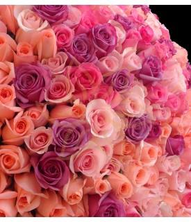 Rosas Bouquet de 200 Rosas